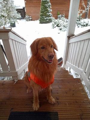 """Aatu"" Skywatch´s Risky Business  -  der Rettungshund"