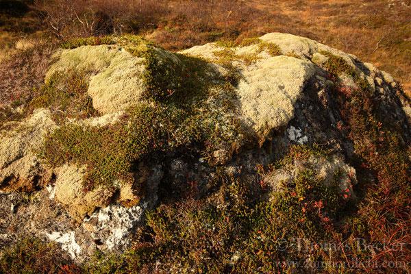 Überwachsener Fels.