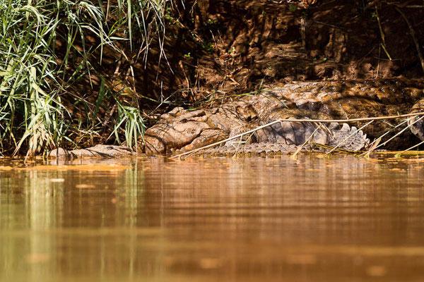 Madagaskar: Zwei Krokodile beim Relaxen