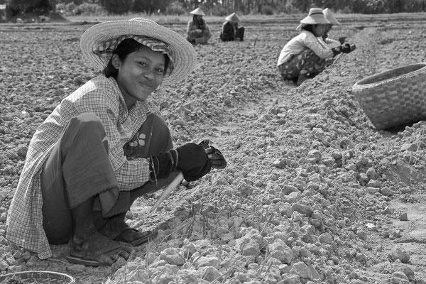 Myanmar people - Frauen bei der Ernte