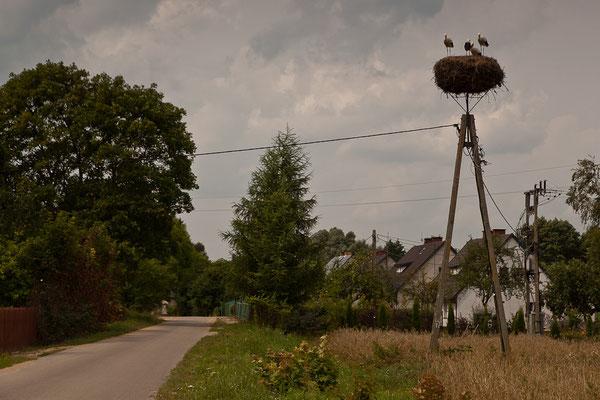 Polen - In den Dörfern wimmelt es von Storchen-Nestern