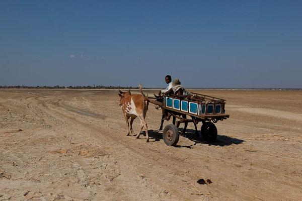 Madagaskar: Wagen mit Zebu