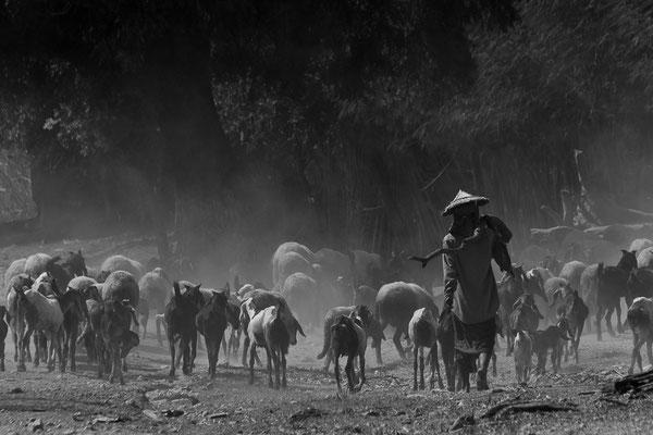 Myanmar people - unterwegs mit Ziegen
