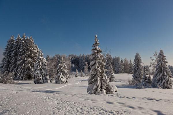GAIS - beim Gäbrisseeli im Winter