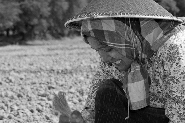 Myanmar people - junge Frau bei der Arbeit auf dem Feld