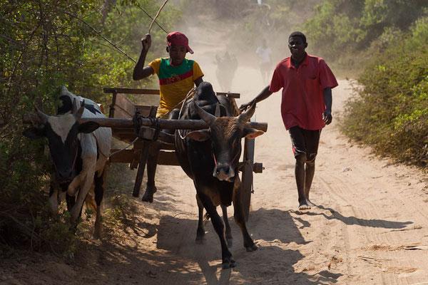 Unterwegs in Madagaskar ... Gegenverkehr