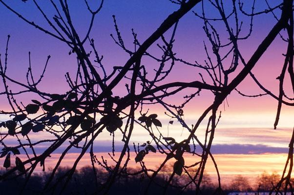 Sonnenaufgang im Spadenland