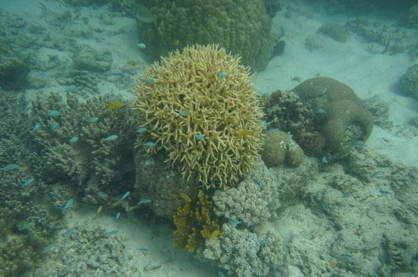 Barrier Reef bei Cape Tribulation