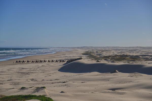Sanddünen bei Stockton Bight, NSW