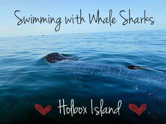 Whale sharks in Holbox, Mexico