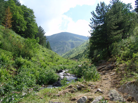 In the Sharr National Park near Brezovica