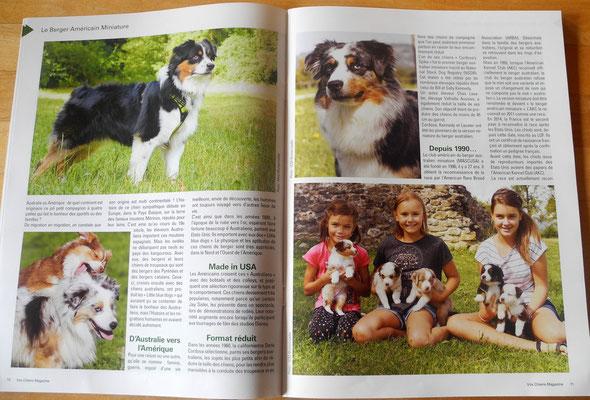 en gaut à gauche : Karbon (izzy x zack) , photo de sa propriétaire , en haut à droite : Izzy , en bas : mes filles sur les côtés avec les derniers chiots de Nellie