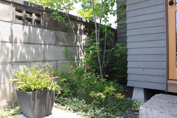 植え込んでから一年が経過 小さくても豊かな庭を