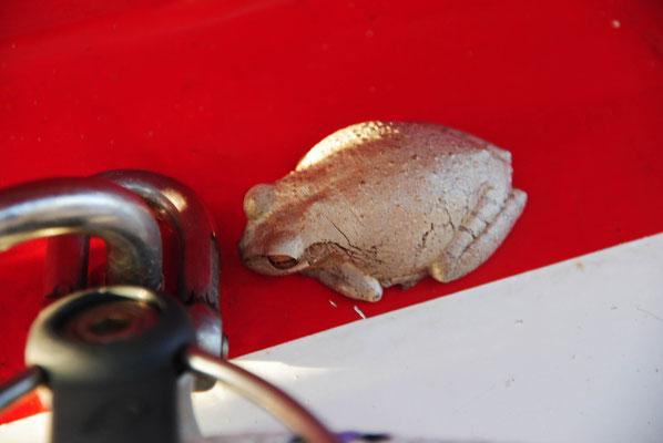 ....unter der Schot hat sich ein blinder Passagier verkorchen. Muss vom Dingi aus an Bord gekommen sein.