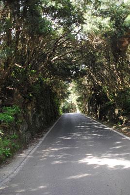 Straße im Anaga Gebirge
