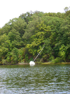 das treibende Wrack im Rohde River