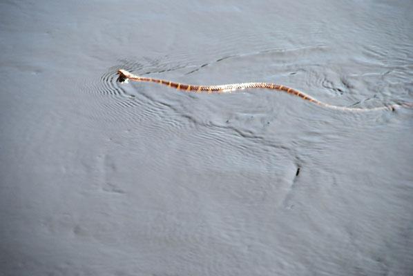 Wasserschlange ahoi