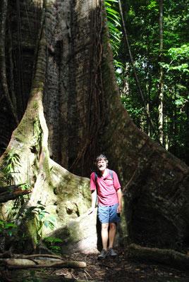 Wolfgang und am Fuße einer Baumwurzel, der Baum selbst ist mehrere 100 Jahre alt