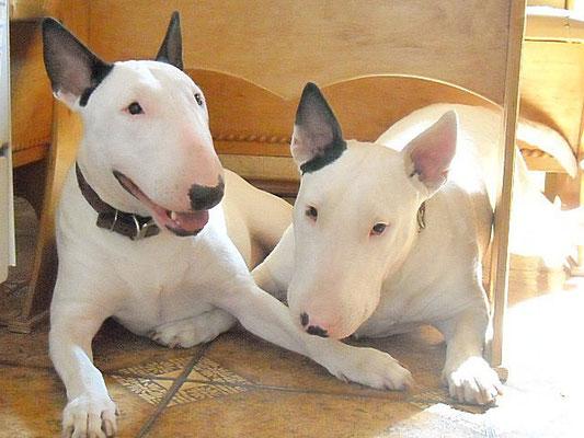 Бася и Риша - любимые девочки ♥♥