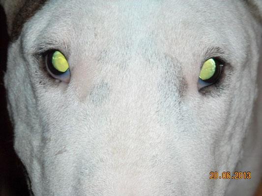 Юнна 10,5 лет-любимые глазки ♥