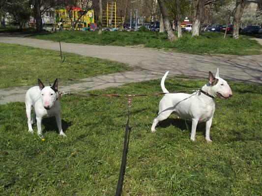 Риша с Ханкой на прогулке.
