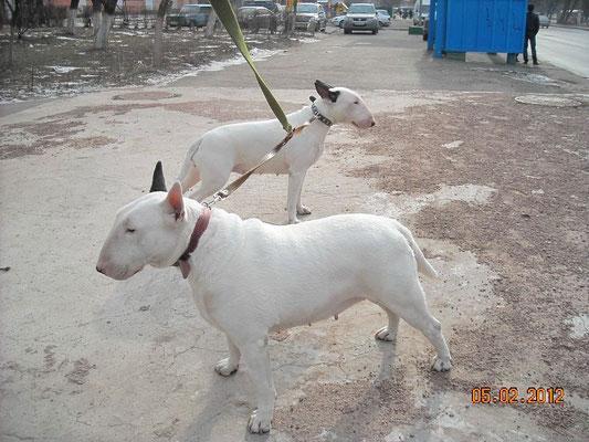 Бася и Риша на прогулке
