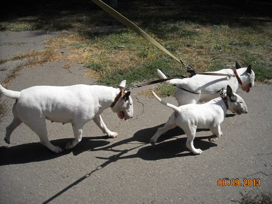 Ханка (3 месяца),тётя Риша и мама Бася на прогулке в одной упряжке ))
