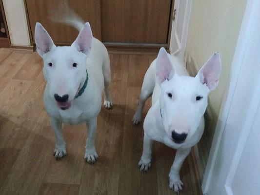 Элька и Юша )) Две подружки.
