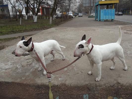 Ханя и Риша 6 января 2014г. на прогулке