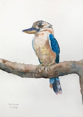 Kookaburra, Aquarell auf guardi artistico aquarello Papier 250 g, 30x20 cm