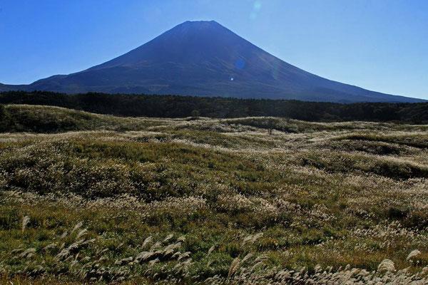 朝霧高原の朝のススキと富士山