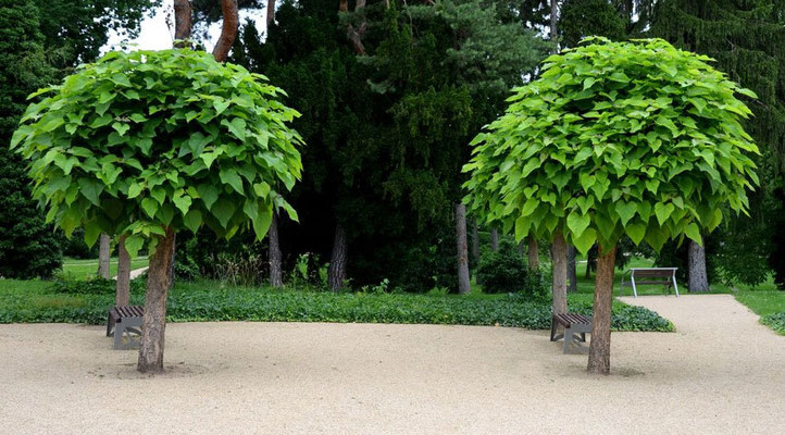 Sonnenschutz durch Bäume