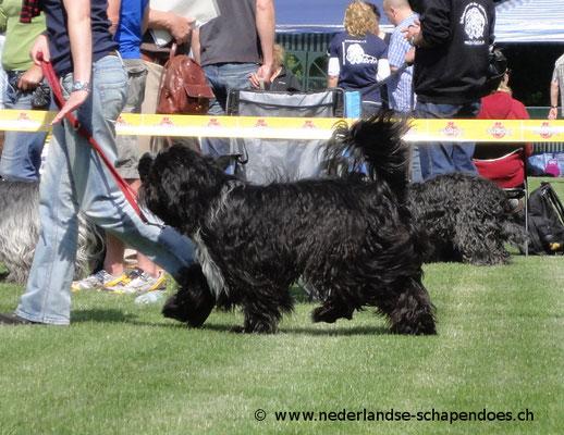 Cooper im Juni 2012 in Alsfeld