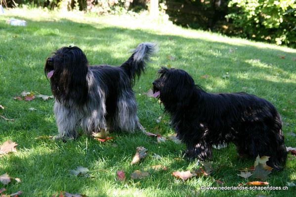 Bijou und Bommel im Herbst 2008
