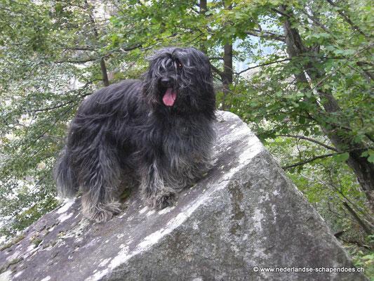 Briana 2008 als Bergziege