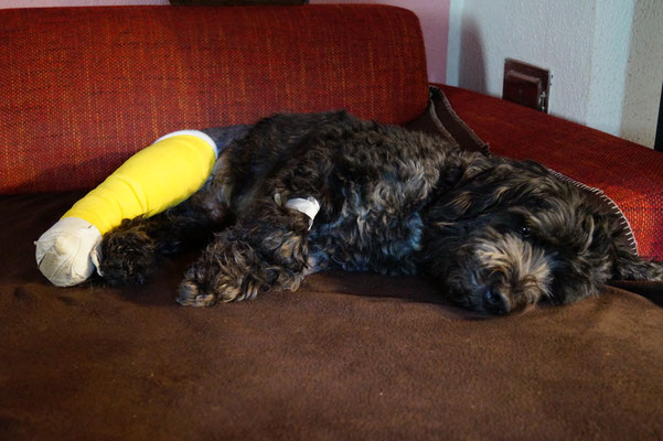 Verletzter Felix, Herbst 2014