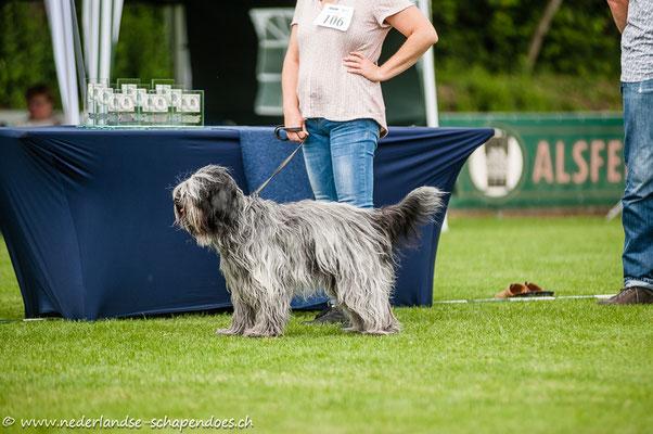 Abby in Alsfeld im Juni 2018