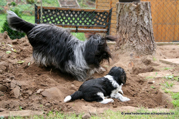 Bijou mit neuer Freundin, ihrer Halbschwester Djipsy, bei der Gartenarbeit