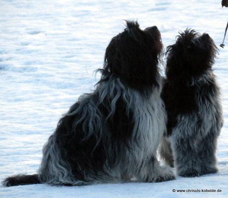 Halbschwester Deike und Edana im Januar 2015