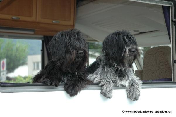 Gaea und Kiffa im Urlaub
