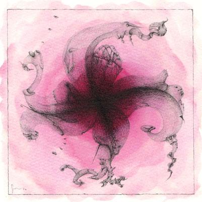 60_Metamorfosi di un fiore