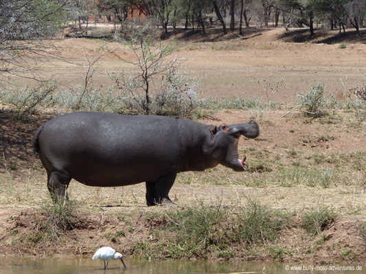Namibia - Mt. Etjo Safari Lodge - Nilpferd