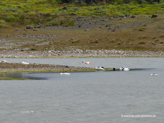 Chile - Parque Nacional Torres del Paine - Laguna de los Cisnes