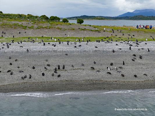 Argentinien - Pinguin-Kolonie im Beagle Kanal