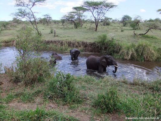 Tansania - Serengeti - Elefanten