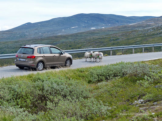 Norwegen - Straße Fv243 - Landschaftsroute Aurlandsfjellet (Snøvegen)