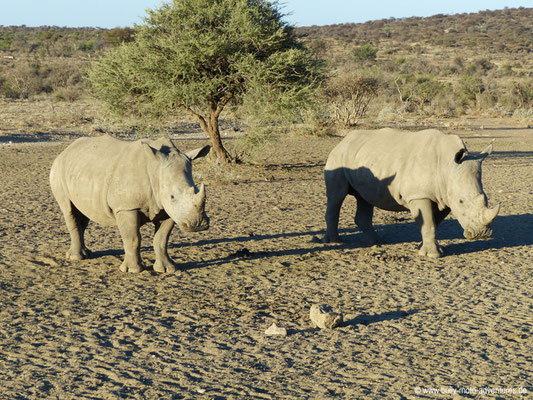 Namibia - Mt. Etjo Wildreservat - Nashörner