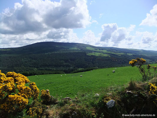 Irland - Wicklow Mountains - Co. Wicklow
