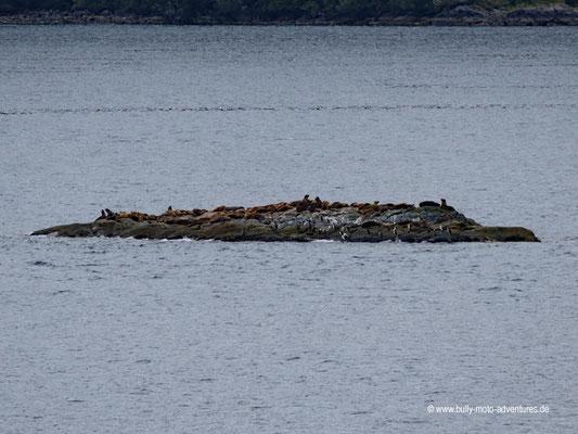 Chile - Fährfahrt von Puerto Natales nach Puerto Montt - Tag 3 - Insel mit Seelöwen