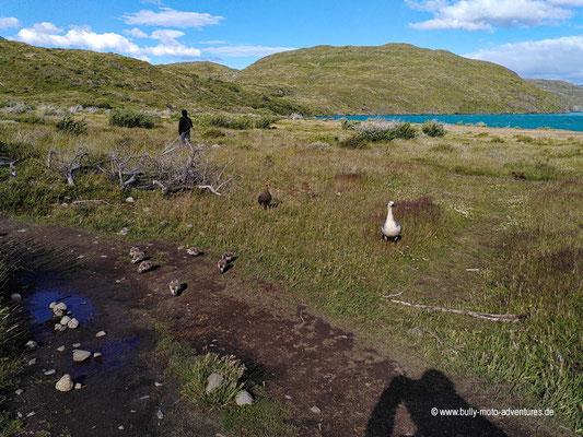Chile - Parque Nacional Torres del Paine - W-Trek - Paine Grande Lodge - Lago Pehoé